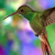 Profile picture of hummingbird