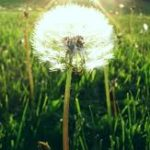 Profile picture of chasingthedandelion