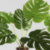 Profile picture of Charliecheeseplant