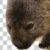 Profile picture of Wombat